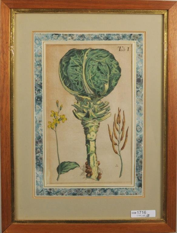 Five Early Framed Botanical Engravings - 3