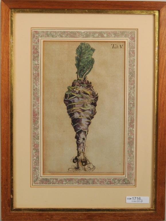 Five Early Framed Botanical Engravings - 4