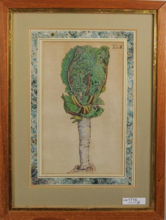 Five Early Framed Botanical Engravings - 5