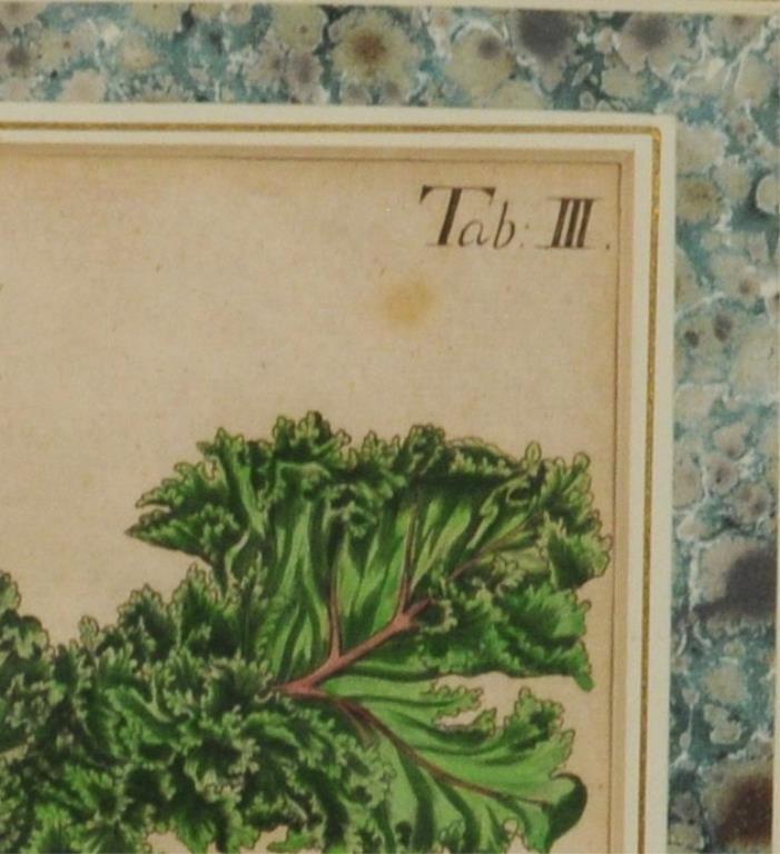 Five Early Framed Botanical Engravings - 6
