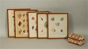 Group Five Framed Hand Colored Seashell Engravings