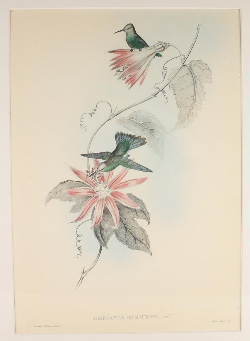 HUMMINGBIRD PRINT BY J. GOULD