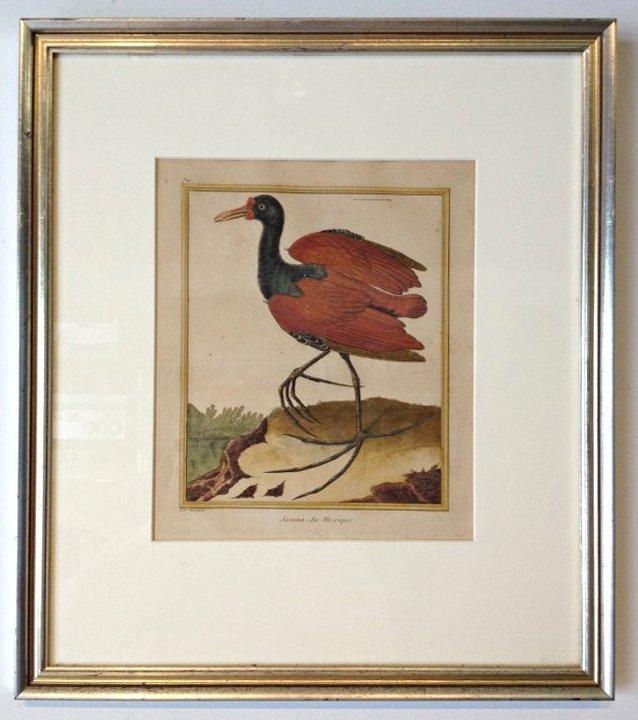 "Jacana Bird Of Mexico ""Pas Martinet"""