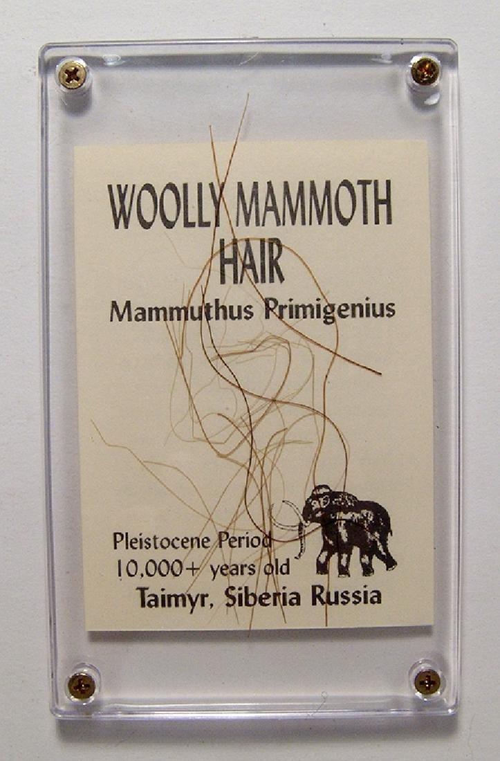 A lock of Wooly Mammoth hair, Pleistocene Epoch
