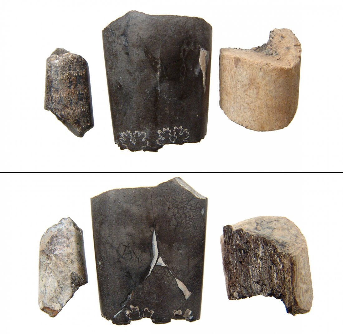 A group of three fossils