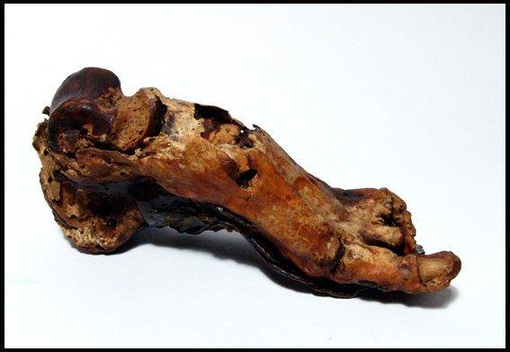 94: Ancient Egypt. Mummified human foot