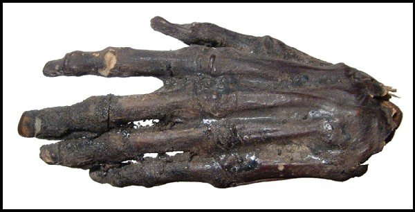 4: Well-preserved Egyptian mummified human hand