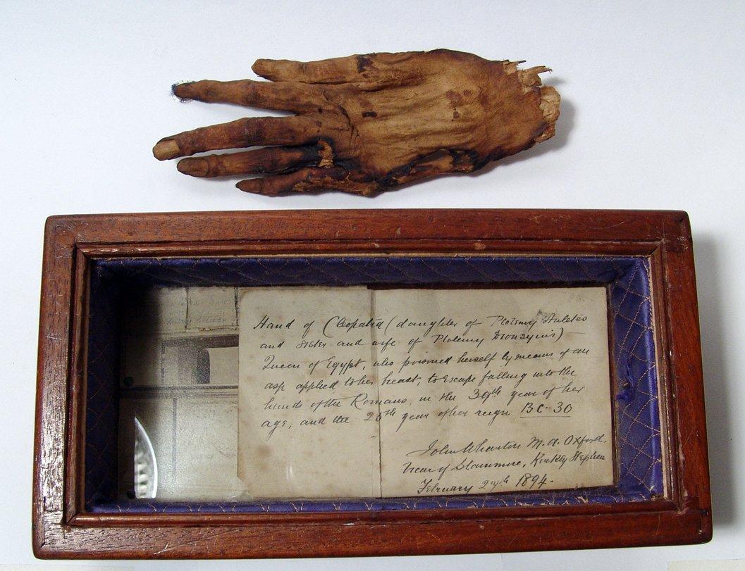 Mummified hand of 'Cleopatra' - 2
