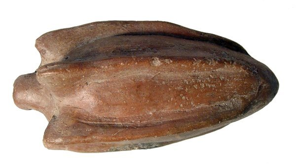 Colima phytomorphic pipe in shape of Yucca fruit or - 6