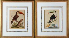 (2) Pair Toucan Engravings,george Edwards18th C.