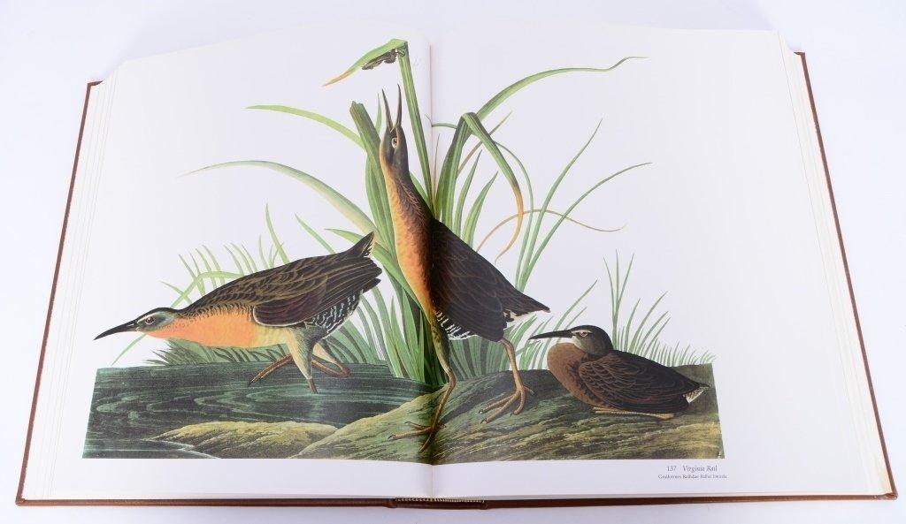 Peterson's Audubon's Birds of America - 7