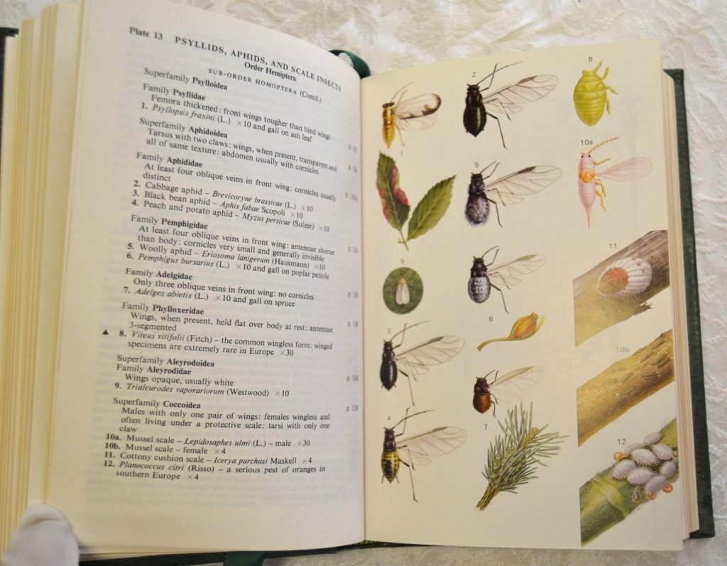 Peterson's Insects of Europe - 4