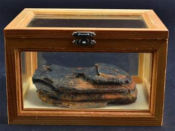 Mammoth Tooth in Wooden Display Box