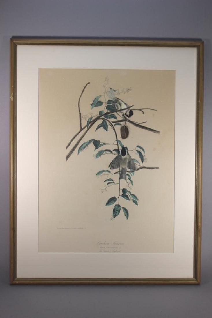 James Audubon Carolina Titmouse Lithograph