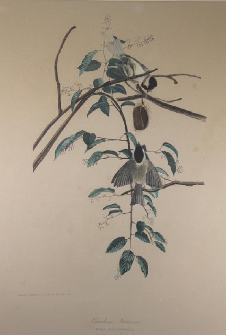 James Audubon Carolina Titmouse Lithograph - 2