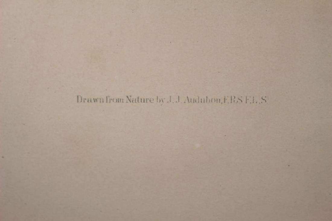 James Audubon Carolina Titmouse Lithograph - 3