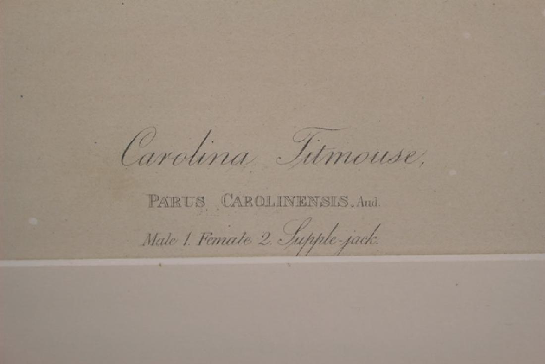 James Audubon Carolina Titmouse Lithograph - 4