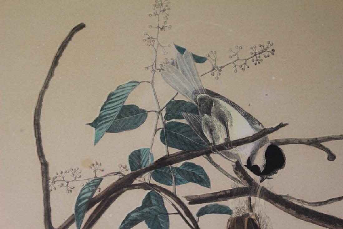 James Audubon Carolina Titmouse Lithograph - 5