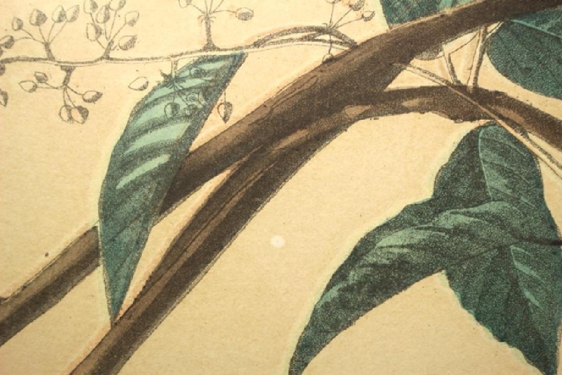 James Audubon Carolina Titmouse Lithograph - 6