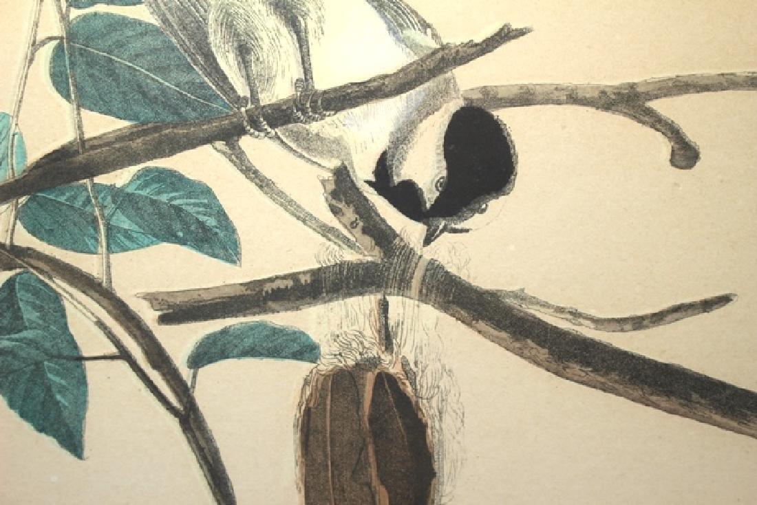 James Audubon Carolina Titmouse Lithograph - 7
