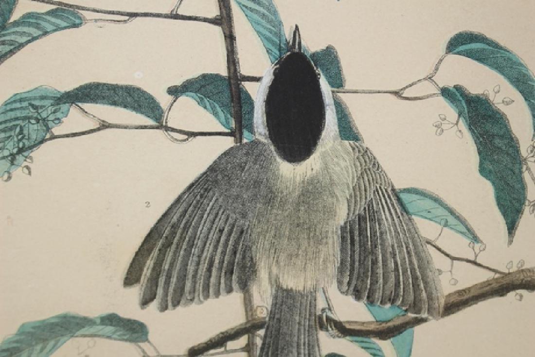 James Audubon Carolina Titmouse Lithograph - 8