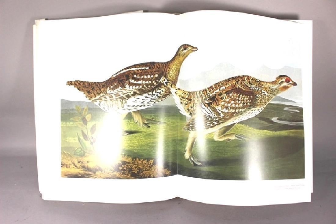Audubon's Birds of America - 2