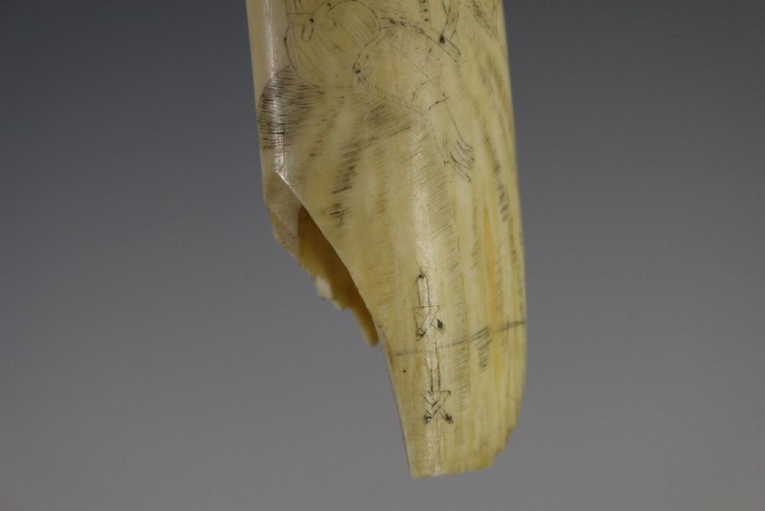 Walrus Tusk Scrimshaw - 5