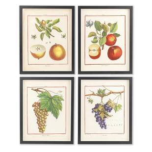A SET OF TWELVE LATER COLOURED ENGRAVINGS OF FRUIT,