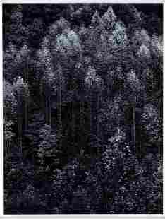 Ansel Adams (1902-1984); Dawn, Autumn Forest, Great