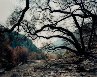 Hans-Christian Schink (born 1961); Glendora Canyon;