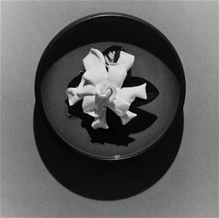 Robert Mapplethorpe (1946-1989); Gardenia in a Bowl;