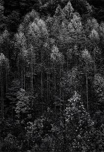 Ansel Adams (1902-1984); Autumn, Great Smokey Mountains
