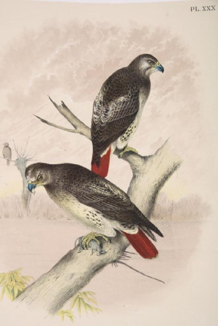 Jacob Studer - Birds Of North America Book - 6
