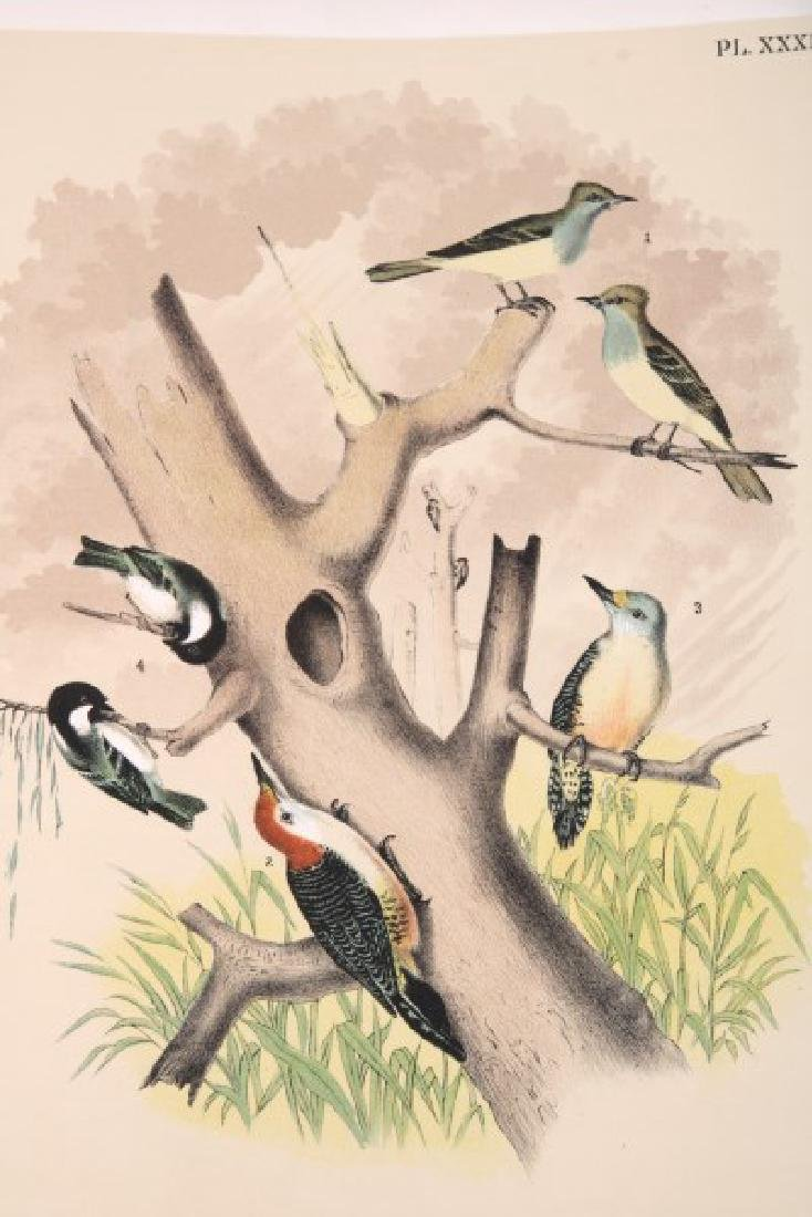 Jacob Studer - Birds Of North America Book - 7