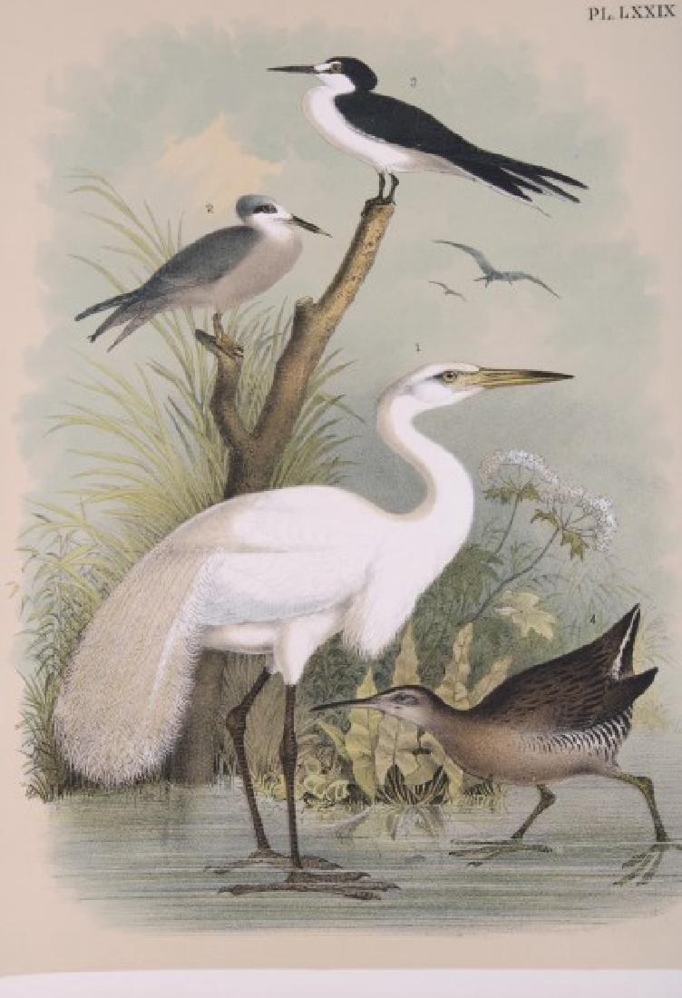 Jacob Studer - Birds Of North America Book - 9