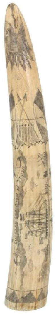16 in. Scrimshaw Walrus Tusk