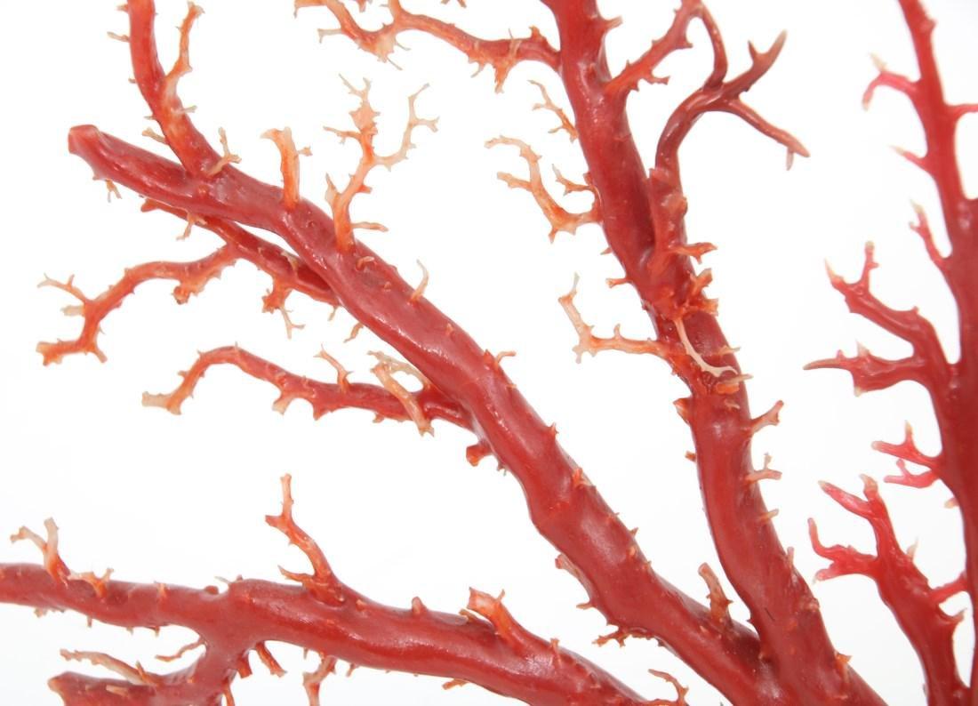Large Natural Red Coral Specimen - 10