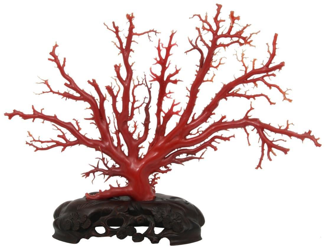 Large Natural Red Coral Specimen