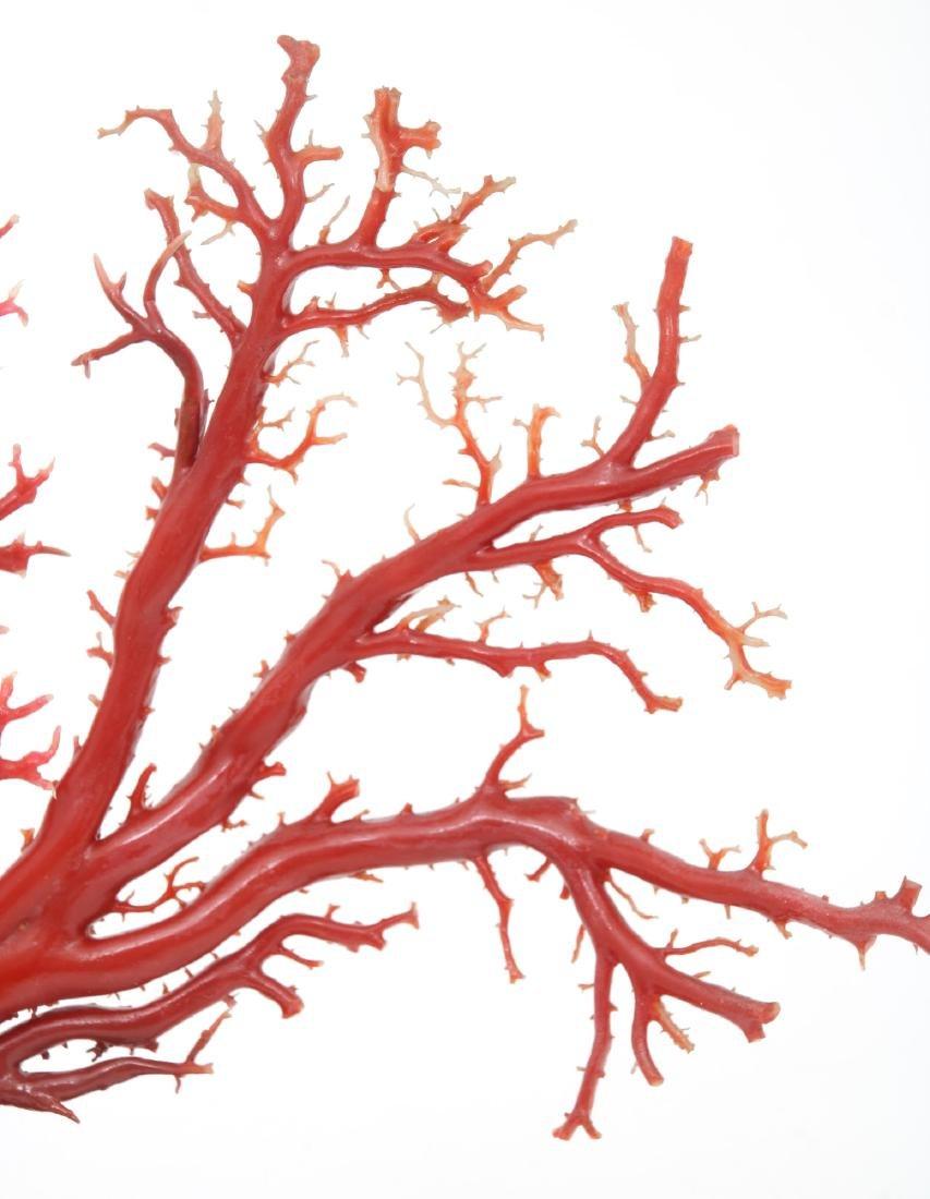 Large Natural Red Coral Specimen - 3