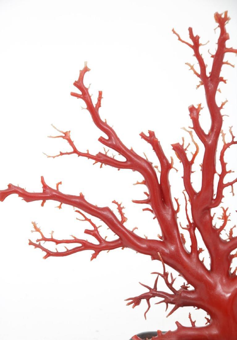 Large Natural Red Coral Specimen - 4
