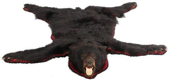 102: Natural Black bear Taxidermy Rug.