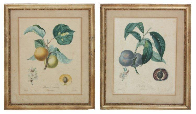 2 De l'Imprimerie de Langlois Botanical Prints