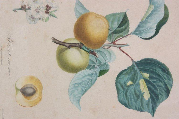 2 De l'Imprimerie de Langlois Botanical Prints - 3