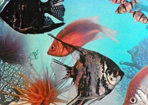 44: Roy Lichtenstein Poster, Save Our Planet... - 3