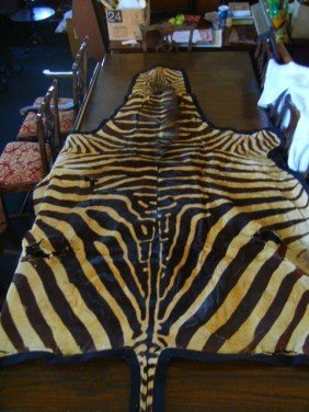 33343: 33343: Vintage Zebra Hide Carpet from Africa c 1