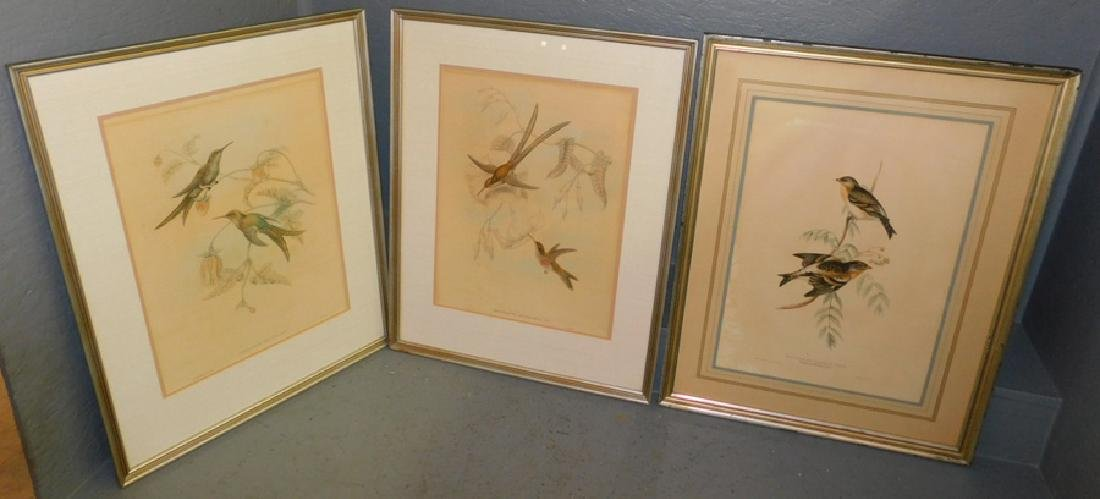 3 Gould bird prints, hummingbirds and finches.