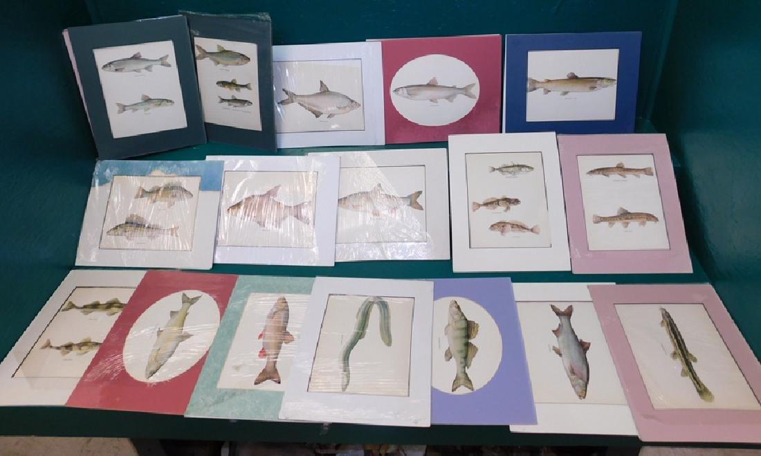 Lot 20 Matted Fish Prints