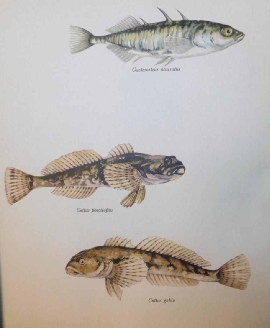 Lot 20 Matted Fish Prints - 2