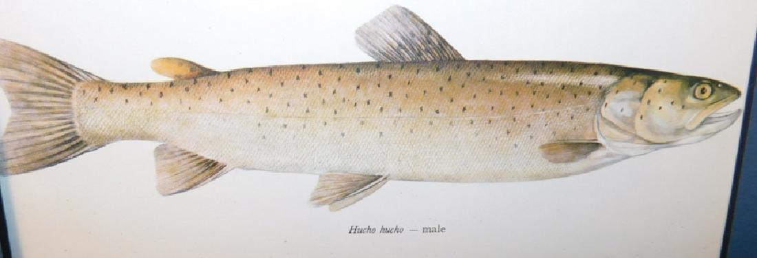 Lot 20 Matted Fish Prints - 3