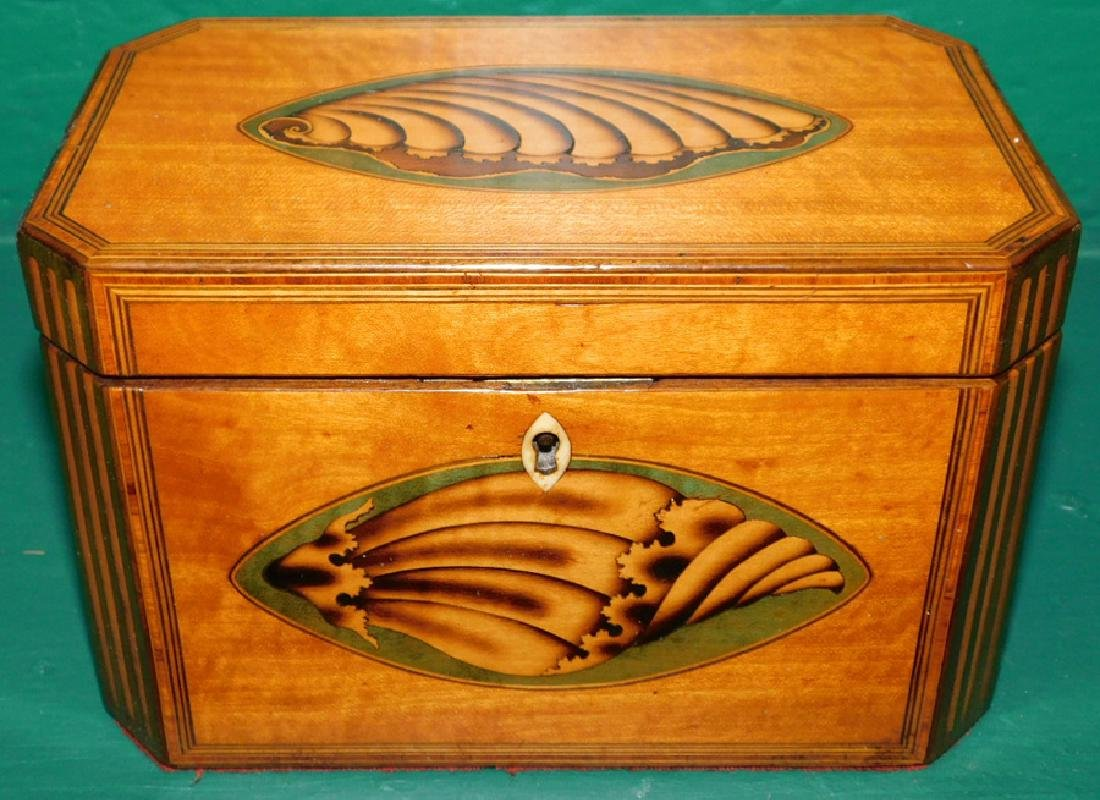 19th C Satinwood Double Conch Shell Tea Caddy